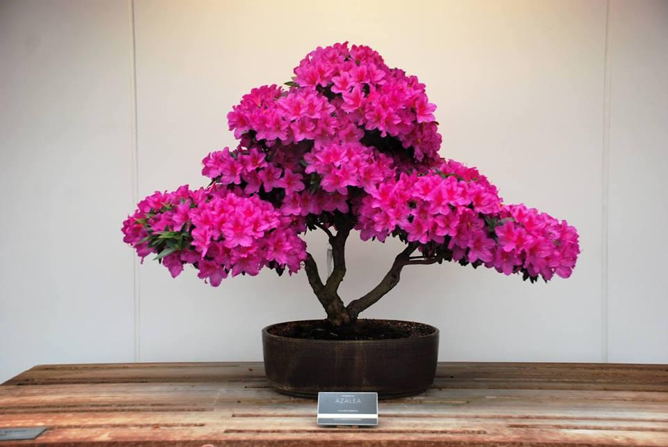 Mother S Day Bonsai Show Kids Out And About Minneapolis St Paul